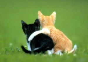 friendship-cats